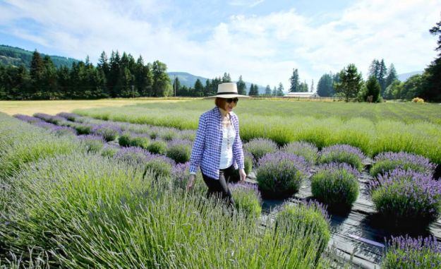 McKEnzie River Lavender Farm - Lavender in bloom