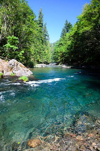 South_Fork_McKenzie_River_(Lane_County,_Oregon_scenic_images)_(lanDB3800)