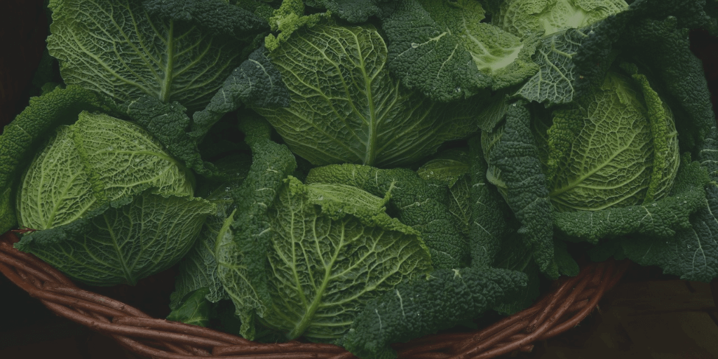 Basket of cabbage