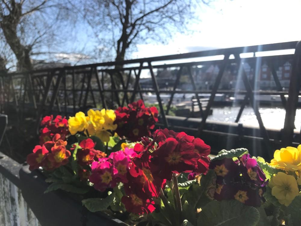 Dane Bridge Flowers