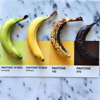 Lucy-Litman-PAntone-Food-1