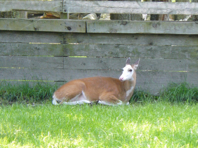 Pebbles Celebrates 20th Birthday at Double Diamond Deer Ranch
