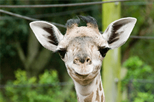 The Houston Zoo is a short drive from Pearland on Highway 288.