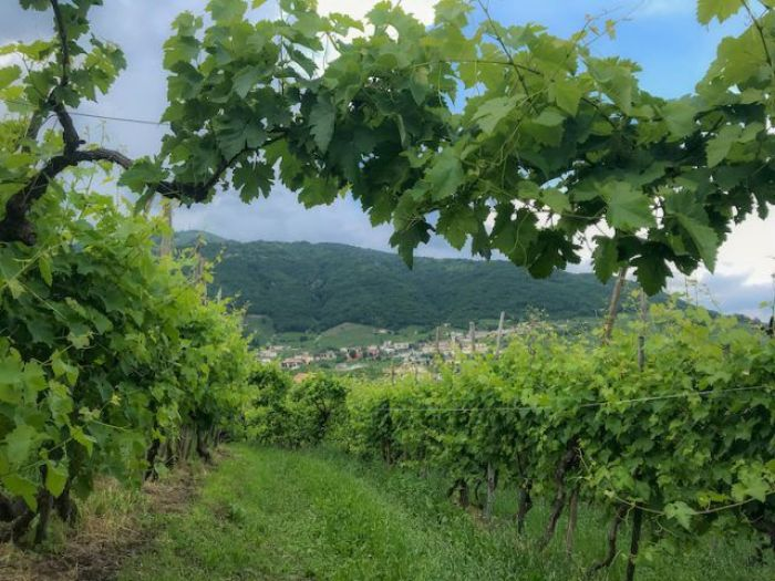 Visit Prosecco Italy Ruggeri Vineyard