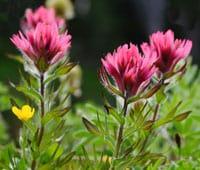 10_wildflower_2