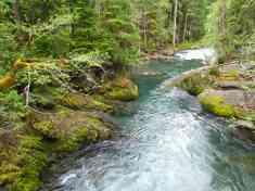 The Ohanapecosh River © Janelle Walker