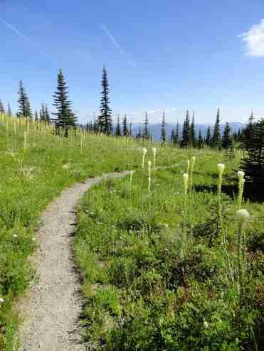 Meadows of bear grass along Kautz Creek Trail © Craig Romano