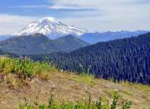 Views of Mt. Rainier and the Sawtooth Ridge from old cuts along the way. © Craig Romano