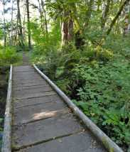 One of the few mellow areas of the Osborne Mountain Trail is at its start. © Craig Romano