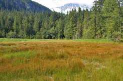 b_view-of-Mt-Rainier