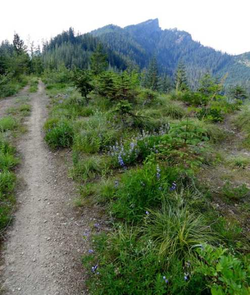Beargrass-lined trail and High Rock hovering in the background. © Craig Romano