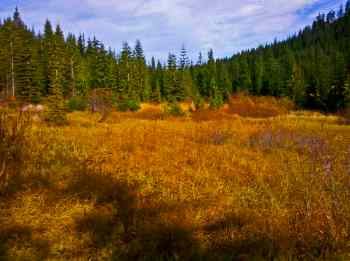 Yurtmeister Meadow glows in autumn gold and red © Ed Book