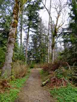 Well maintained trail through an attractive forest © Craig Romano