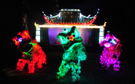 electric-woods-illuminated-lions
