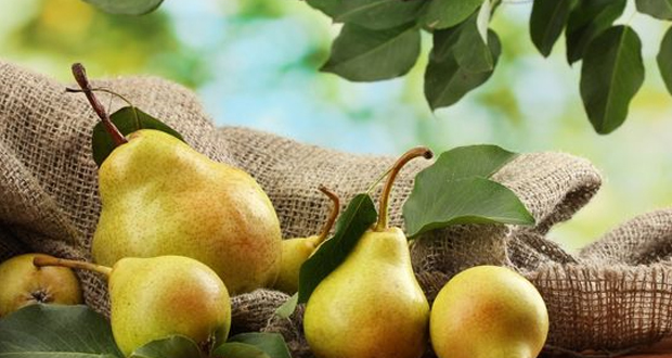 Pears in Yercaud