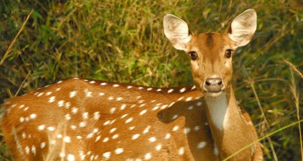 Yercaud Deer Park