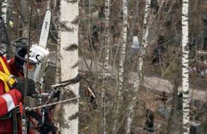 Удаление аварийных деревьев на кладбище