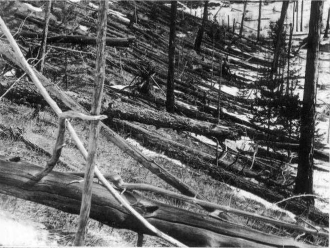 Tunguska (part of flattened area) taken in 1929. Making an Impact: Meteoroids, Meteors and Meteorites