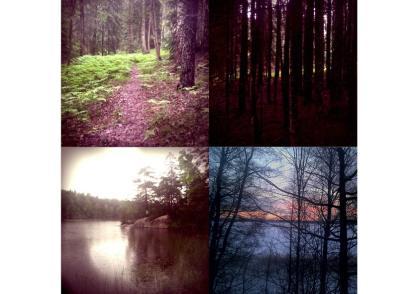 skogen_bild2
