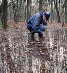 Help, onze bossen verdrinken