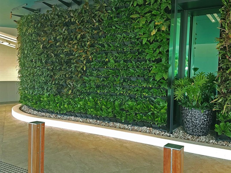 Living Plant Green Wall Gold Coast