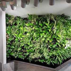 green walls supplier australia