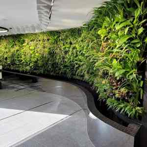 living green wall melbourne