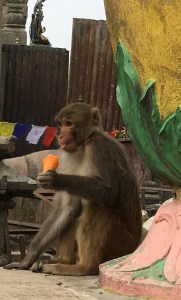 Monkey with Ice Cream