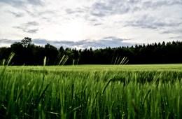 Nature – Feld