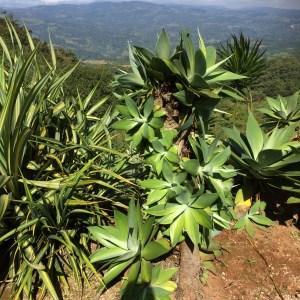 cacti at rentals san ramon costa rica
