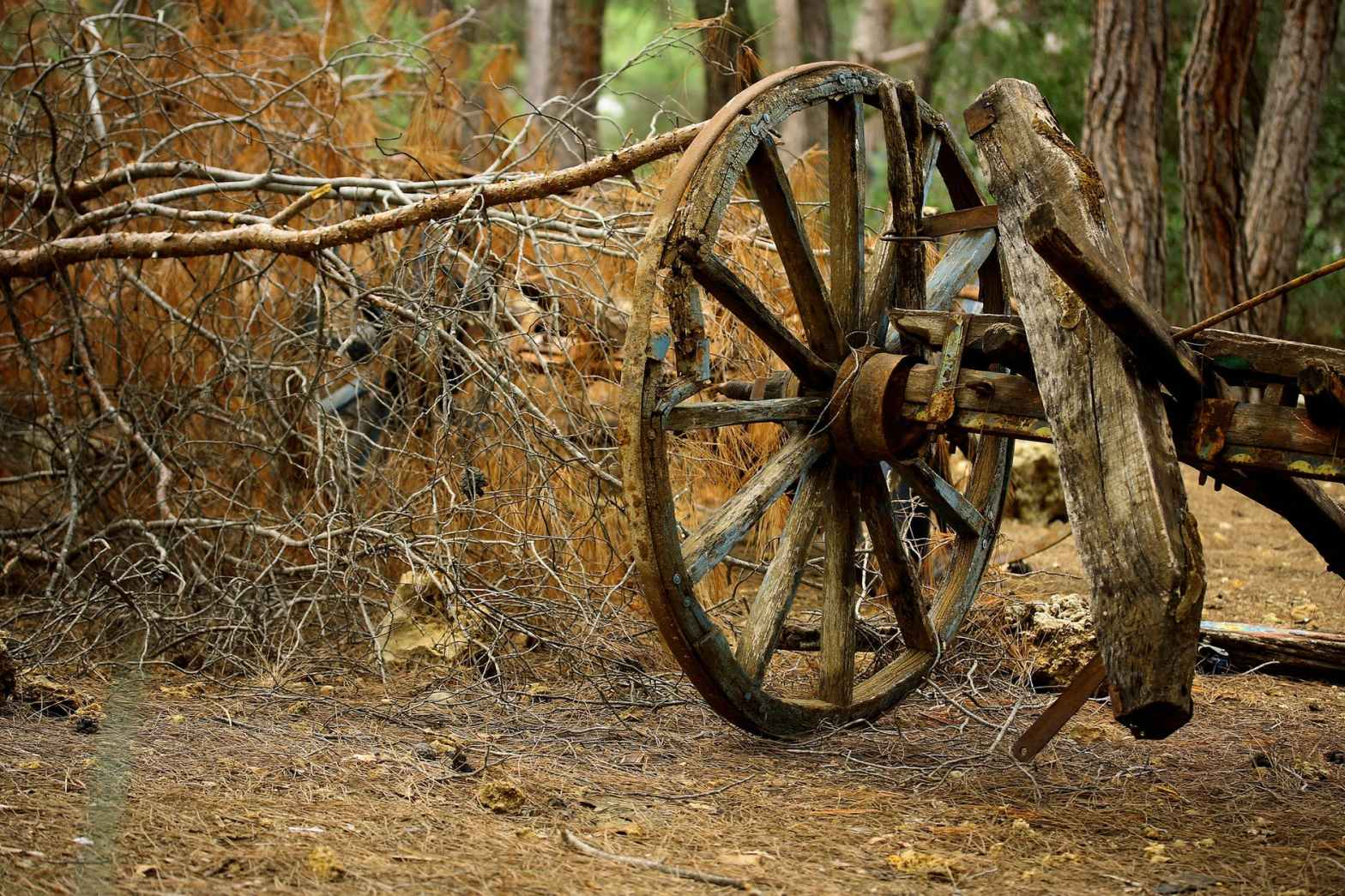 brown carriage wheel