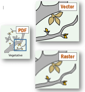 vector or raster example