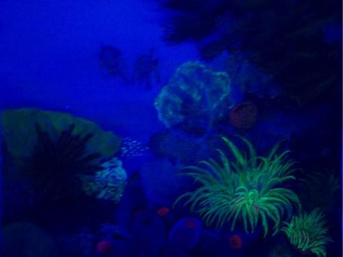 Corals in UV light - chalk & pencil