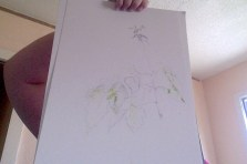 sapling sketch 07 15 2014