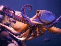 cephalopods_05