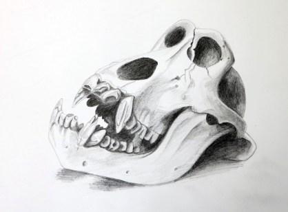 gorilla, pencil 2h, 2b, 4b