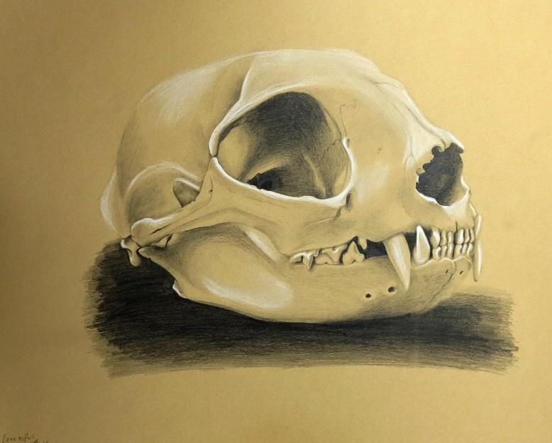 bobcat skull, pencil 2h, hb, 2b, 4b