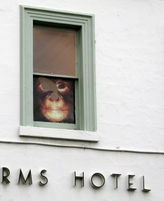 ape in the hotel