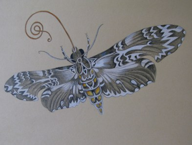moth, pencil hb & coloured