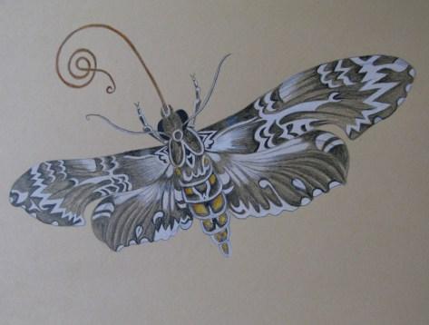 moth, pencil hb & coloured