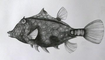 fish, pencil 2h, 2b, 4b