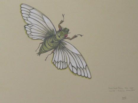 cicada, pencil 2h & coloured