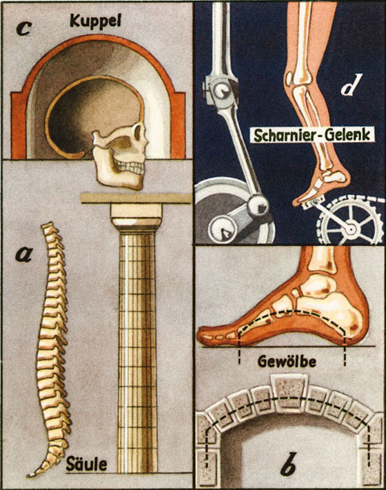 construction of the body and architecture