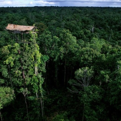 Aerial view of a recently abandoned tree house.