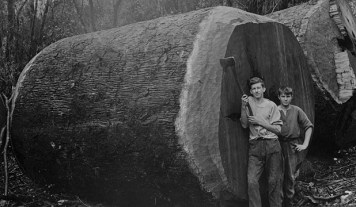 19th century forestry workers stand next to a felled kauri. Photo: Alexander Turnbull Library.