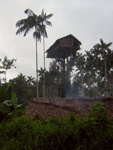 Tree houses built by the Korowai people in Papua, Indonesian New Guinea