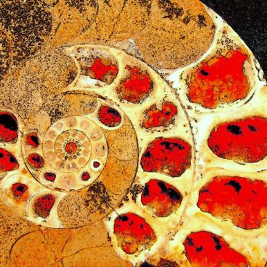 Ammonite, Cambridge Museum. Flickr Commons, User: Tina Negus. http://tinyurl.com/hjvpl6u