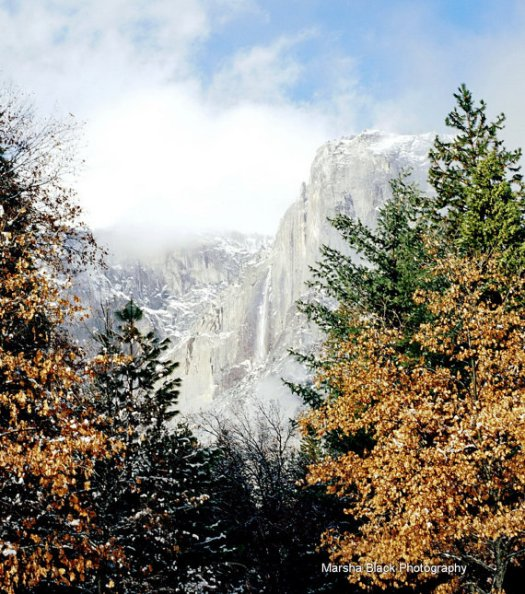 Fall Colors in Yosemite   Marsha J Black