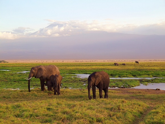 Visum Ostafrika Kenia