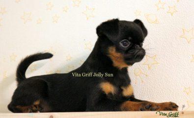 vita-griff-jolly-sun-brabancon